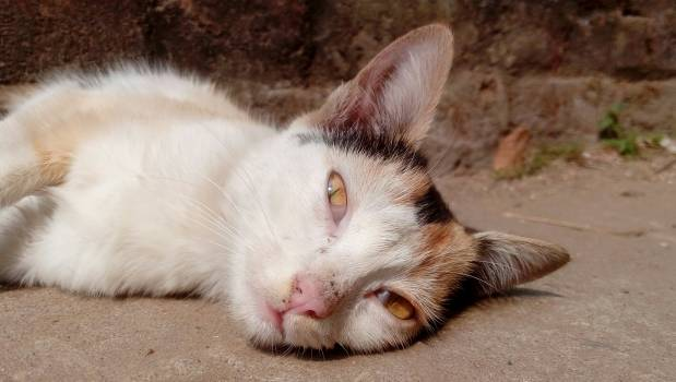 Kitten Feline Cat #233611