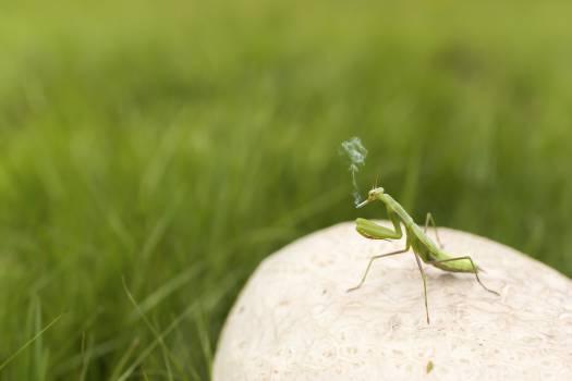 grasshopper insect grass  #23370