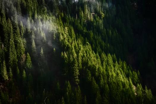 Landscape Tree Forest #233791
