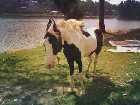 horse animal mane  #23409