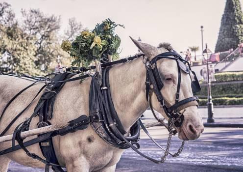horse animal  #23421