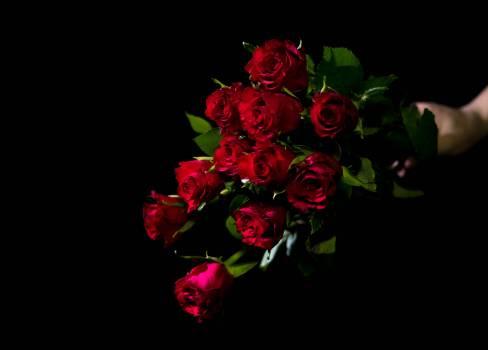 Flower Bouquet Pink #234236