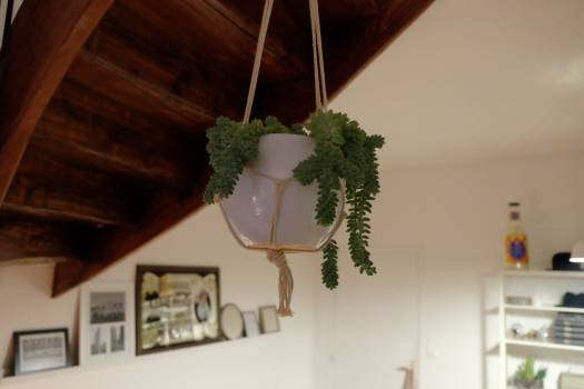 plant pot decor  Free Photo