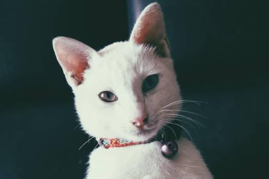 Kitten Cat Feline #234819