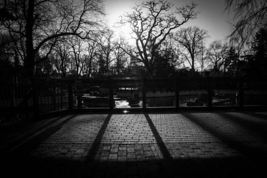 trees fence cobblestone  #23485