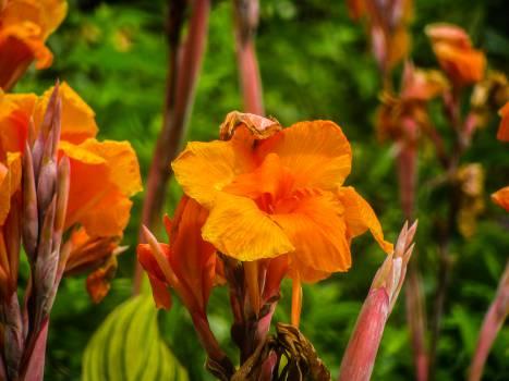 orange flowers garden  Free Photo