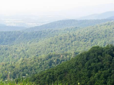 mountains trees hills  Free Photo