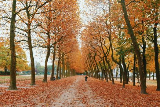 November Autumn Forest #235162