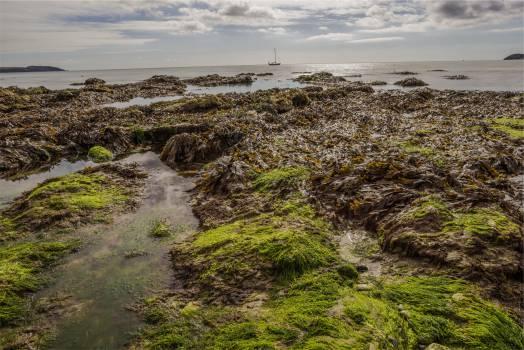 seaweed mud water  #23518