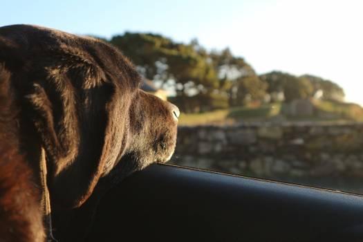 Dog Canine Hunting dog Free Photo