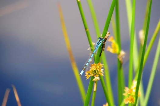 dragonfly insect  #23535