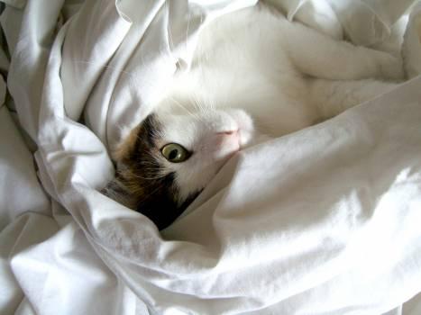 Kitten Cat Animal #235382