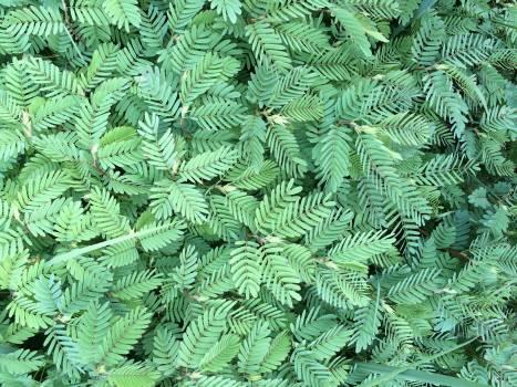 Fern Plant Tree Free Photo