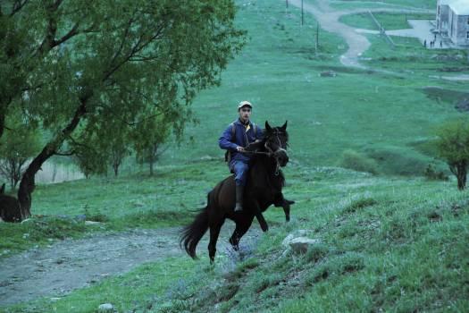 Cowboy Horse Animal Free Photo