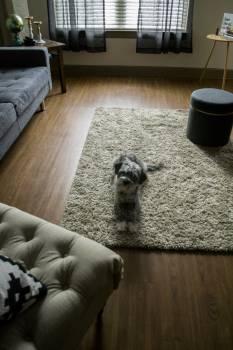 Terrier Hunting dog Dog #235742
