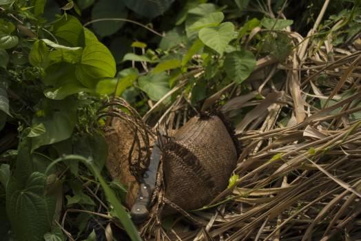 Armadillo Tree Mammal #236176