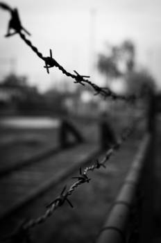 barbed wire barb wire black and white  Free Photo