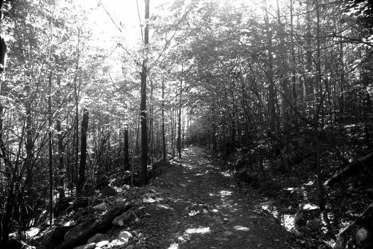 forest woods trail  Free Photo