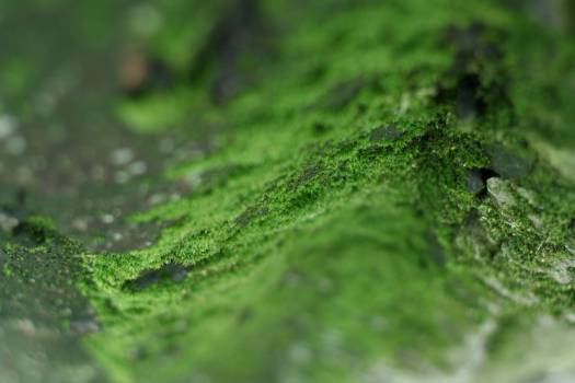 green moss  Free Photo