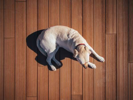 dog pet animals  #23682