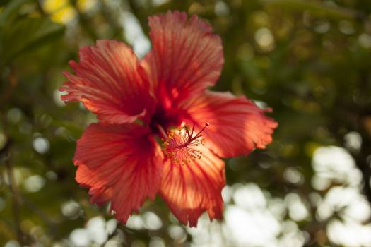 Flower Petal Orange #237120
