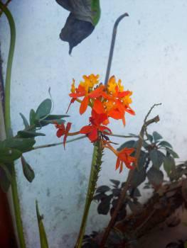 plants flowers garden  #23712