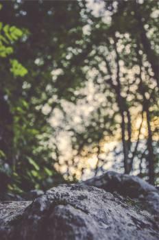 rocks boulders forest  #23743