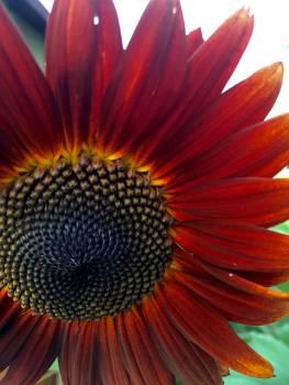 Orange Flower Petal Free Photo