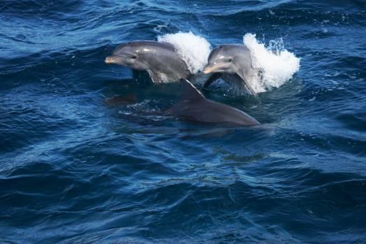Water Ocean Sea Free Photo