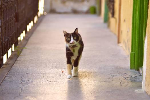 Cat Feline Animal #237515