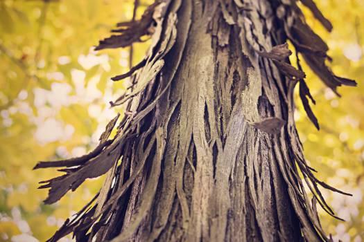tree trunk bark wood #23756