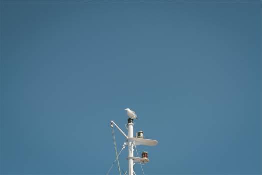 mast bird blue Free Photo