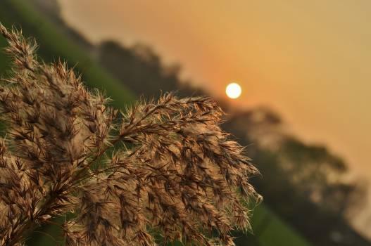 plant sunset dusk Free Photo