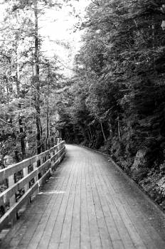 wood path trail Free Photo