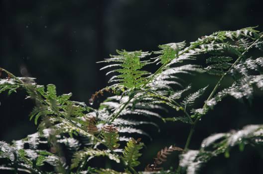 green plants Free Photo