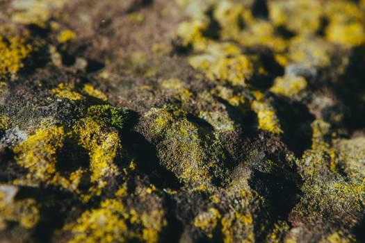 moss nature Free Photo