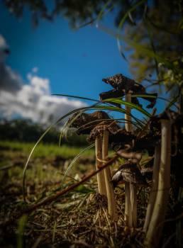 mushrooms fungus fungi #23804