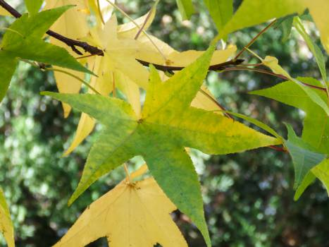 leaves branches Free Photo