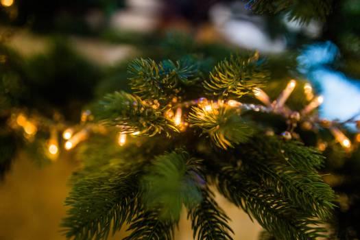 christmas tree lights #23838