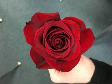 Rose Pink Bouquet #238503