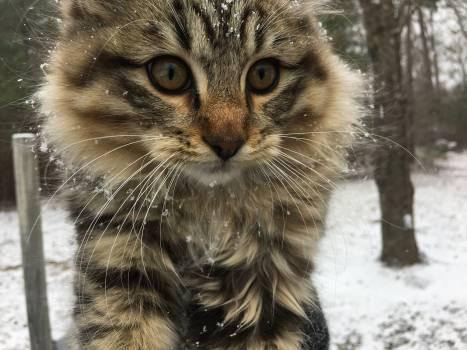Cat Feline Animal #238523