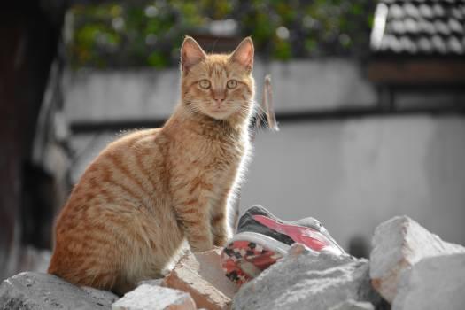 Cat Feline Kitten #238577