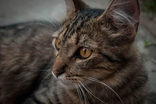 Cat Feline Animal #238968