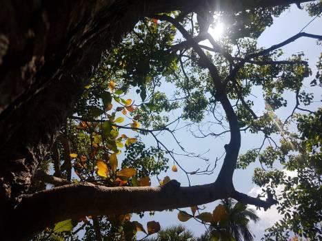 Tree Woody plant Vascular plant #239021
