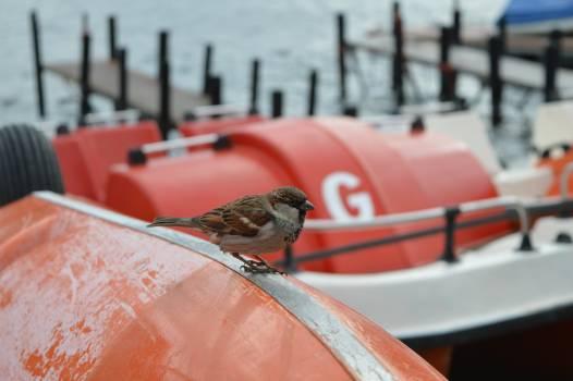 Bird Sparrow Wildlife #239320