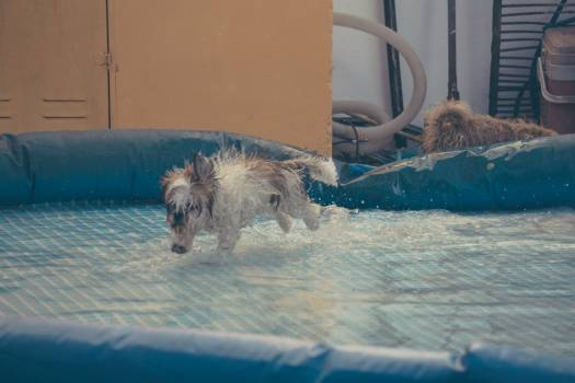 Terrier Hunting dog Dog #239322