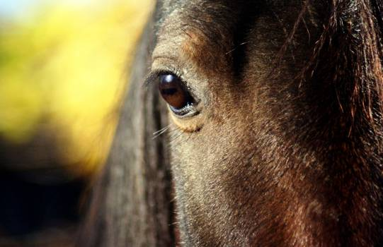 Horse Equine Bridle Free Photo