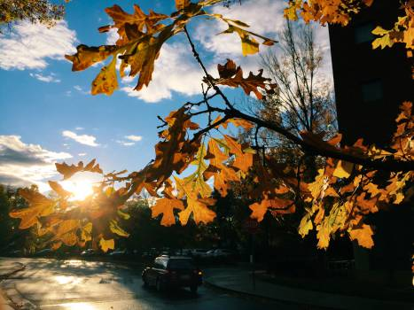 fall autumn sunshine Free Photo