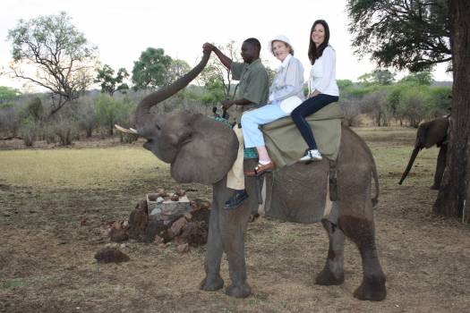 Elephant Mammal Animal #239577