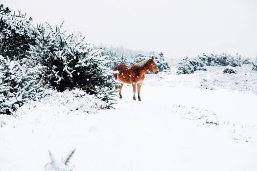 horse animals snow #23960